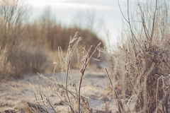 Gefrorene Blätter und eisige Niederlassungen, erstaunlicher Winterhintergrund mit Büschen Stockfoto