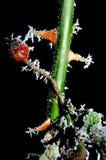 Gefrorene Blume lizenzfreies stockbild