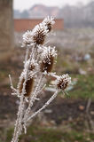 Gefrorene Blume Stockfoto