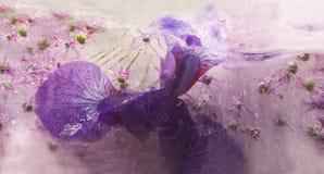 Gefrorene Blume von Iris Lizenzfreie Stockfotografie
