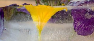Gefrorene Blume von Iris Stockfoto