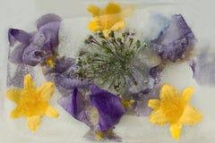 Gefrorene Blume von Iris Lizenzfreie Stockfotos