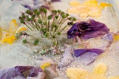 Gefrorene Blume von Iris und von Zwiebel Lizenzfreies Stockbild