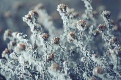 Gefrorene Blumen Lizenzfreies Stockfoto
