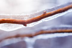 Gefrorene Buschniederlassung während des Winters mit der starken Schicht Eis Niederlassungen umfassend lizenzfreie stockbilder