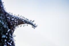 Gefrorene Dornen bedeckt mit Eiskristallen Lizenzfreies Stockfoto