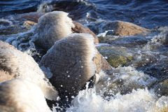 Gefrorene, eisige Ostseeküste 25 stockbilder