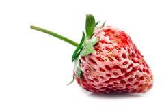 Gefrorene Erdbeere stockbild