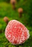 Gefrorene Erdbeere auf grünem Moss Background Lizenzfreie Stockfotos