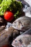 Gefrorene Fische Lizenzfreie Stockfotos