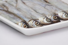 Gefrorene Fische Stockfotos