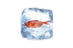 Gefrorene Fische, Eis Stockfoto