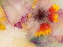Gefrorene frische Blumen Stockbilder