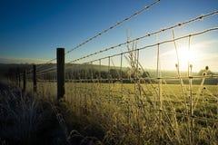 Gefrorene Gräser auf Stacheldrahtzaun Großbritannien Stockfoto