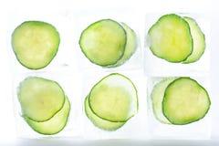 Gefrorene Gurkenscheiben in den Eiswürfeln Lizenzfreies Stockbild