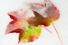Gefrorene Herbstblätter Stockfotos
