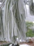 Gefrorene Kiefernnadeln mit kleinen Eiskristallen in der Natur lizenzfreie stockbilder