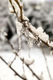 Gefrorene Knospen im Eis Stockfotos