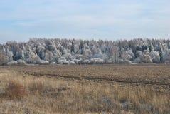 Gefrorene Landschaft: Wald bedeckt mit Frost Stockfoto
