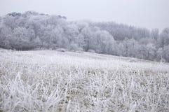 Gefrorene Natur mit gefrorenem Gras auf einem Wiesenwinter Stockfotos