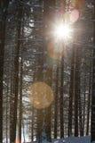 Gefrorene Niederlassungen hintergrundbeleuchtet Lizenzfreie Stockfotografie