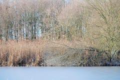 Gefrorene Niederlassungen am Rand von See im Winter Stockfotografie