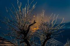 Gefrorene Niederlassungen von Bäumen an einem eisigen Tag stockbild