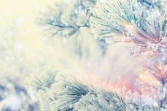 Gefrorene Niederlassungen von Zedern oder von Tanne auf Wintertagesschneehintergrund, Natur im Freien Stockfoto