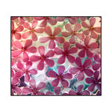 Gefrorene rosafarbene Blumen auf Weiß Lizenzfreie Stockfotos