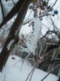 Gefrorene rote Beeren rowen an den Baum, der mit Frost bedeckt wird lizenzfreies stockbild