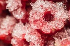 Gefrorene rote Himbeeren Makro Stockfoto