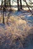 Gefrorene Schilfe und Zweige, Wintersaisonkonzept Stockfotografie