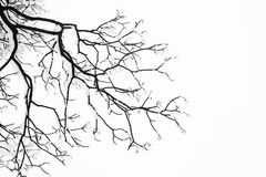Gefrorene schneebedeckte Bäume und Niederlassungen in einfrierendem Winter gestalten landschaftlich Lizenzfreie Stockfotos