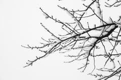 Gefrorene schneebedeckte Bäume und Niederlassungen in einfrierendem Winter gestalten landschaftlich Stockfotos