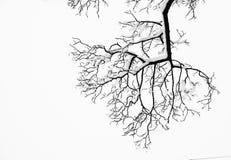 Gefrorene schneebedeckte Bäume und Niederlassungen in einfrierendem Winter gestalten landschaftlich Lizenzfreies Stockbild