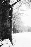 Gefrorene schneebedeckte Bäume und Niederlassungen in einfrierendem Winter gestalten landschaftlich Lizenzfreies Stockfoto
