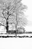 Gefrorene schneebedeckte Bäume und Niederlassungen in einfrierendem Winter gestalten landschaftlich Stockbild
