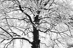 Gefrorene schneebedeckte Bäume und Niederlassungen in einfrierendem Winter gestalten landschaftlich Stockfoto