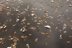 Gefrorene Seeoberfläche Blätter unter dem Eis Stockbild