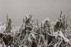 Gefrorene Seeoberfläche mit Schilfen Stockfoto