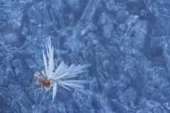 Gefrorene Spinne auf Eis im Winter Stockfotos