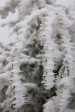 Gefrorene Strauchniederlassung während des Winters Stockbilder