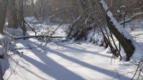 Gefrorene Waldstromnatur in den Schneeoberteilen Bäumen gestalten landschaftlich stock footage