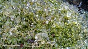 Gefrorene Wasser-Tröpfchen auf Moos Lizenzfreies Stockbild