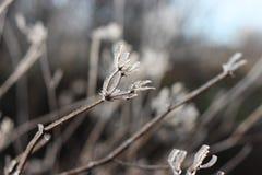 Gefrorene Wiesenblume Stockfotografie