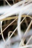 Gefrorene Wiesenlandschaft Lizenzfreies Stockbild