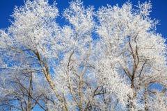 Gefrorene Winterbäume mit Frost auf ihm stockfotos
