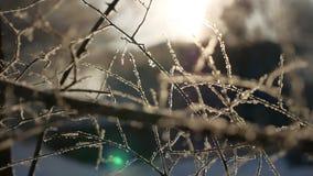 Gefrorene Winterbaumaste sonnen schönes Sonnenlicht des grellen Glanzes die Landschaft Stockfoto