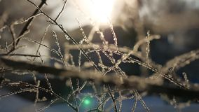 Gefrorene Winterbaumaste sonnen schönes Sonnenlicht des grellen Glanzes die Landschaft Lizenzfreies Stockfoto