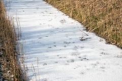 Gefrorener Abzugsgraben bedeckt mit Eis und Schnee Lizenzfreies Stockbild